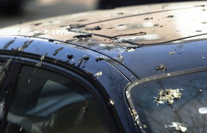 اثر فضله پرندگان روی رنگ بدنه ماشین